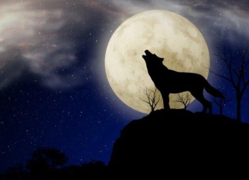 moon.jpg.6812f07e81d950979492bc8aad021772.jpg