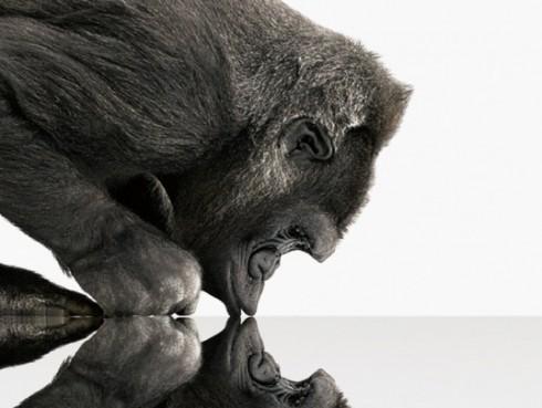 corning-gorilla-glass-537x405